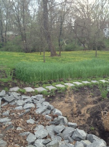 Grass full of tiny yellow flowers of some sort, near a water filtration pond of some sort...