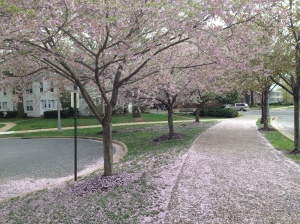 "Post-storm blossom ""snow"""