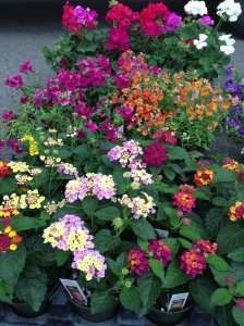 Enjoyed the farmer's market flora...