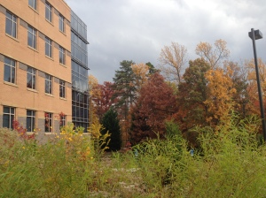 GMU Campus