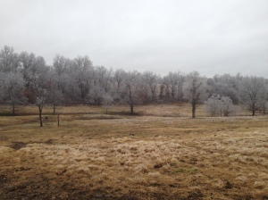 The farm, covered in ice
