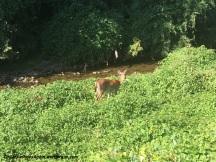 Hey, Deer, wanna go for a bike ride?
