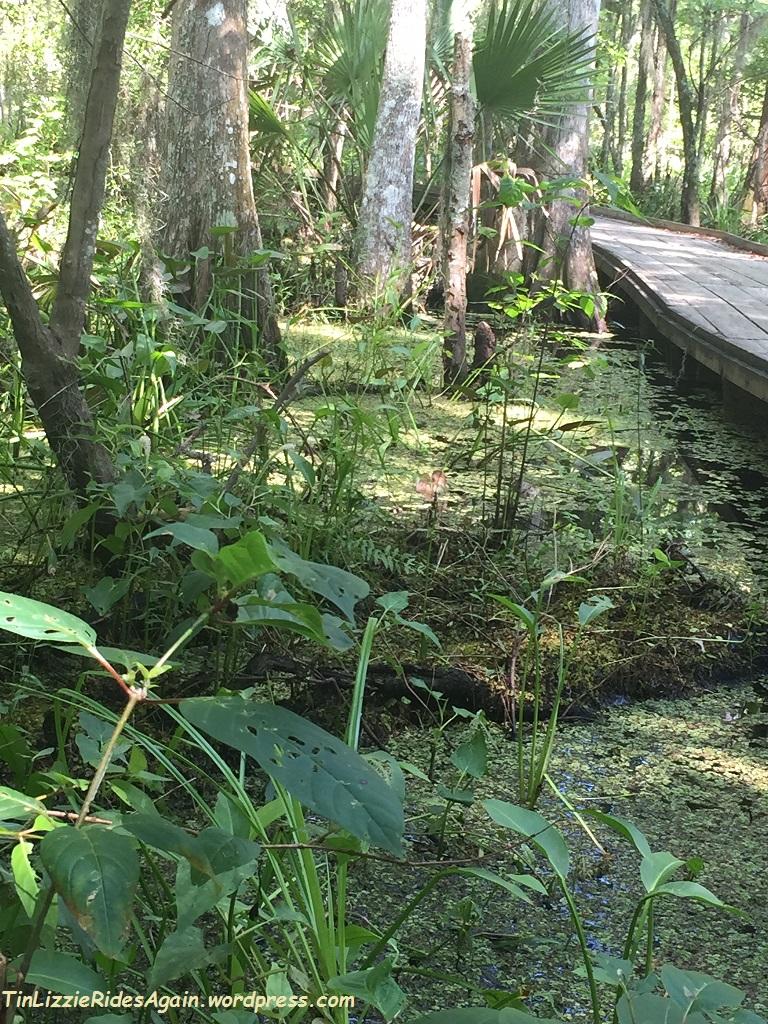 Swamp 9