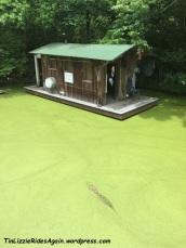 Swamp zoo