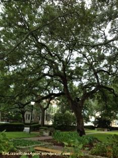 2012_Savannah