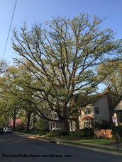 2015_neighborhood fave tree
