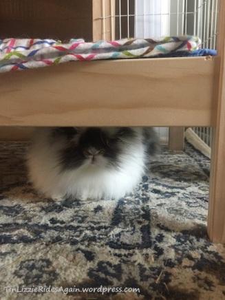 Gaston Under the Bed