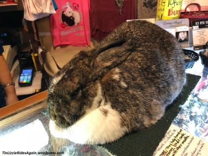 Working Bunny 1